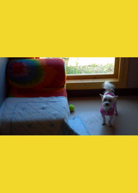 dogsdayinn4